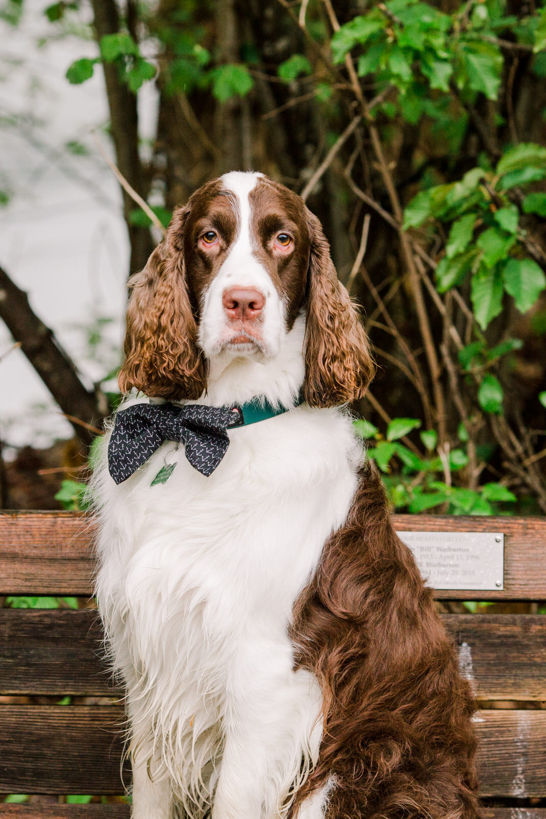 weddings with pets, ring bearer dog, Michele Mateus Photography